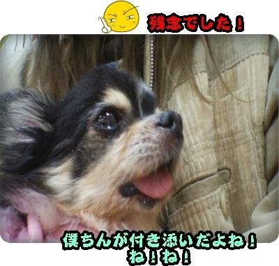 はるひマイクロ2DSC_3999