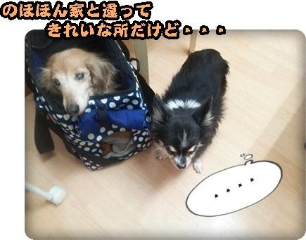 おんぷマイクロ2DSC_4037