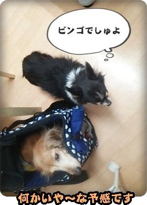おんぷマイクロ3DSC_4036