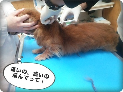 おんぷマイクロ2DSC_4041