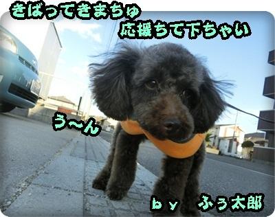 ふぅ太郎トライアル2004