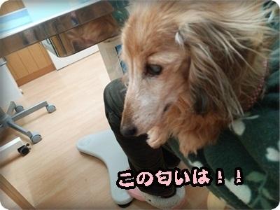 おんぷ肝臓DSC_4273