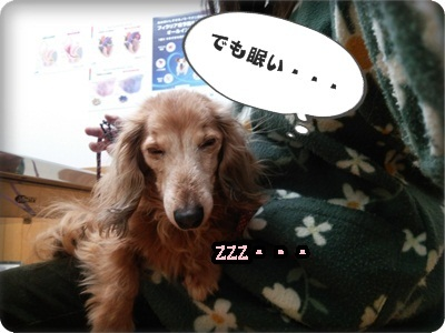 おんぷ肝臓DSC_4290