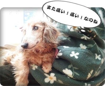 おんぷ肝臓DSC_4292