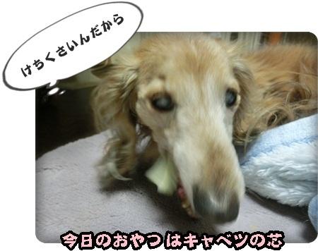 おんぷキャベツ002