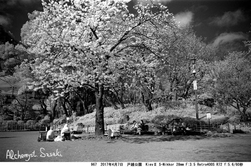 戸越の桜967-18