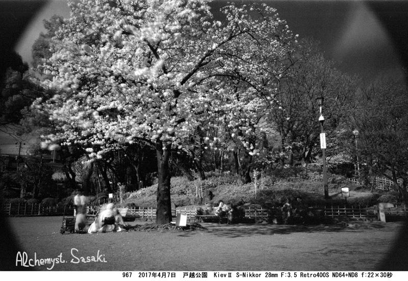 戸越の桜967-19