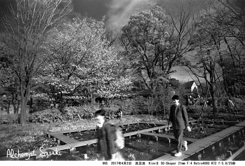 洗足池の花見965-12