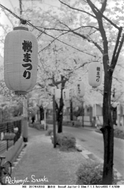 立会道路の桜968-38
