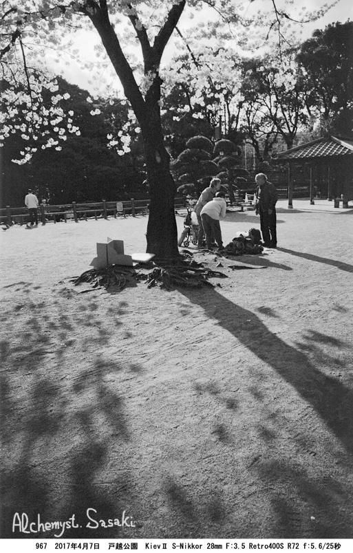 戸越公園の桜967-30