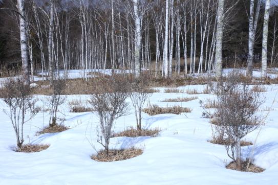残雪が溶け始めた開田高原