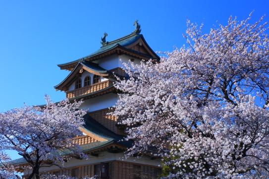諏訪市高島城の桜