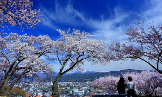 伊那市桜の名所春日公園で桜を楽しむ若人