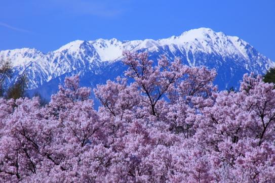 残雪の空木岳、田切岳・仙涯嶺と彼岸桜
