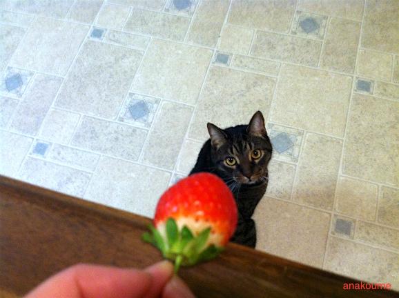 イチゴ祭り3