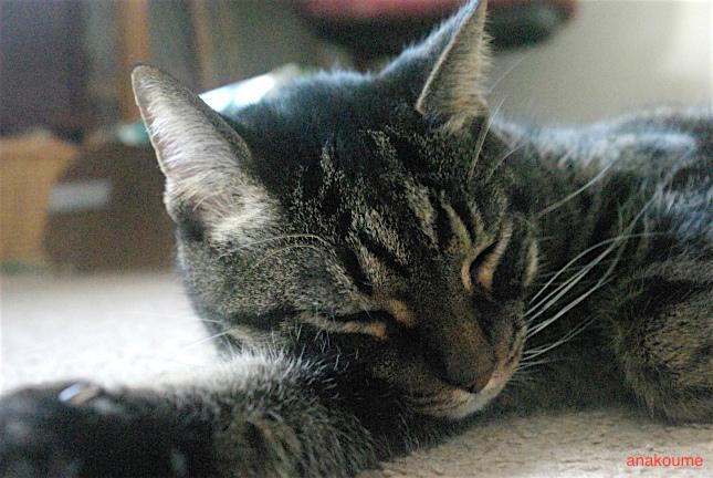 セルフ腕枕2