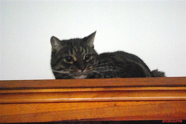 本棚の上でワクワク2