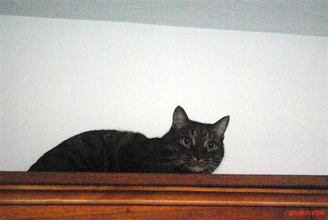 本棚の上でワクワク3