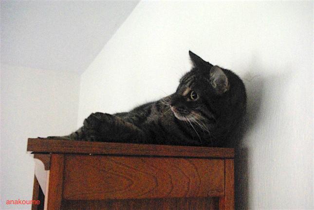 本棚の上でワクワク5