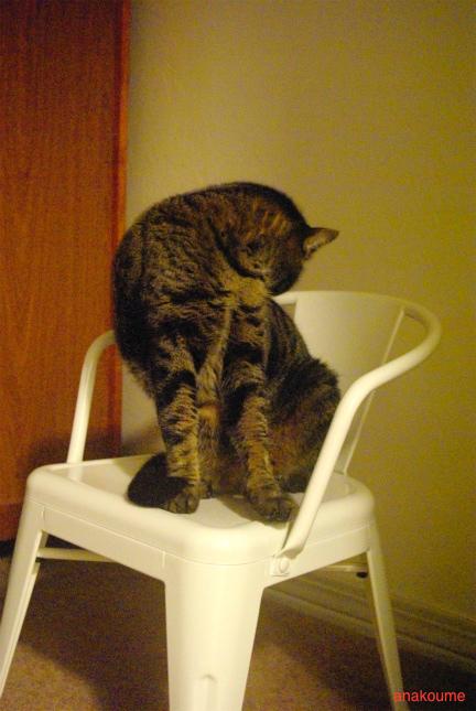 椅子でまったり