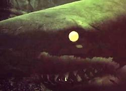 パチンコ「CR JAWS~it's a SHARK PANIC~」で使用されている歌と曲の紹介。「Carmina Burana」
