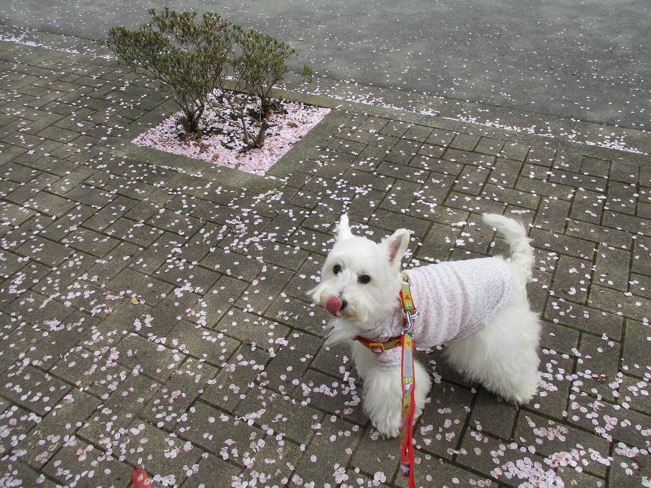 桜が舞ってるよ(笑)