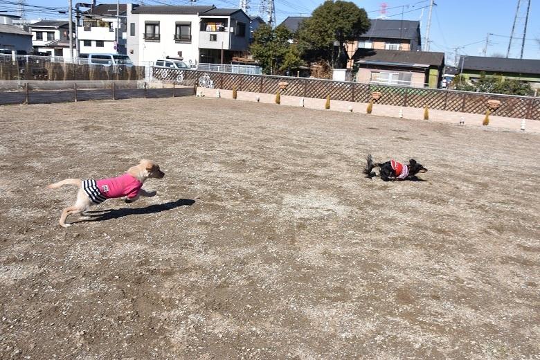 711 メロ&花ちゃん