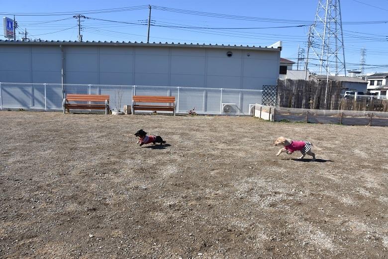 715 メロ&花ちゃん