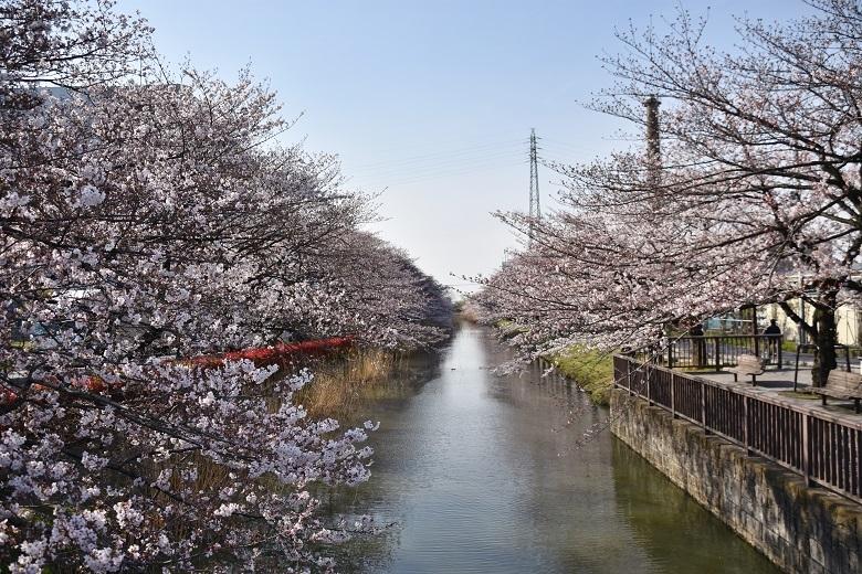 189 桜並木