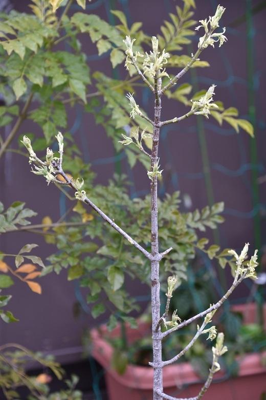 095 植栽
