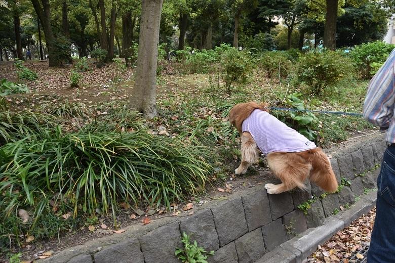 722 清澄公園