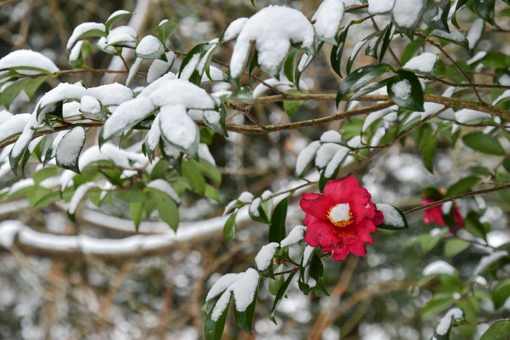 雪の石畳-3-1