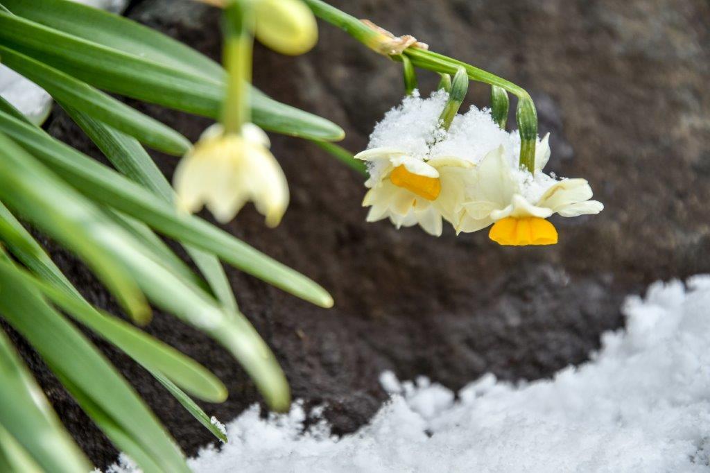雪の石畳-6-1