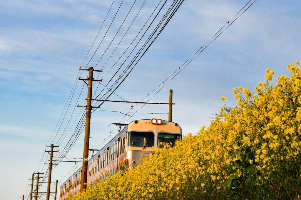 伊予鉄電車-2-1