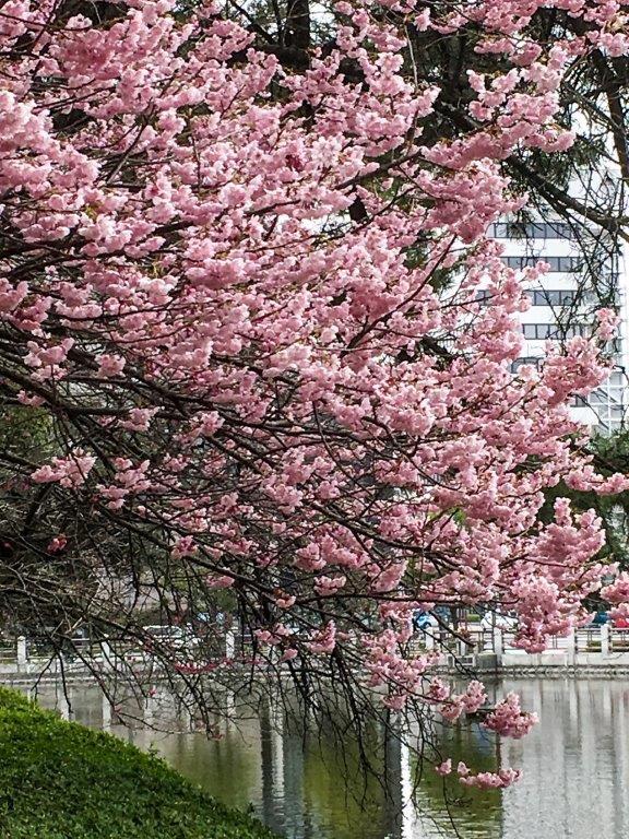 3.6堀之内の春競演-4-1
