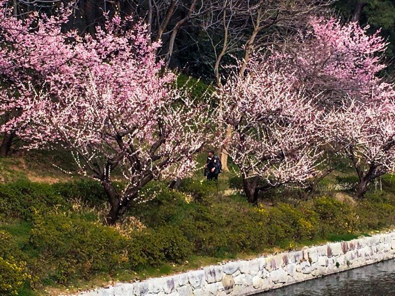 3.6堀之内の春競演-5-1
