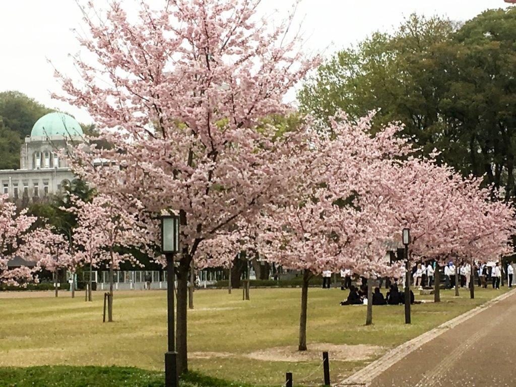 47 松山城公園の桜-1-1