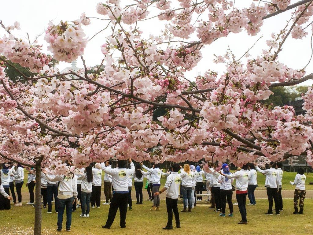 47 松山城公園の桜-3-1