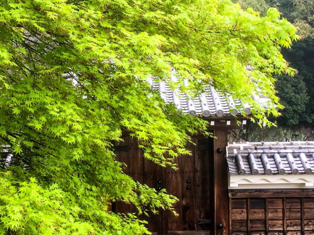 47 松山城公園の桜-4-1