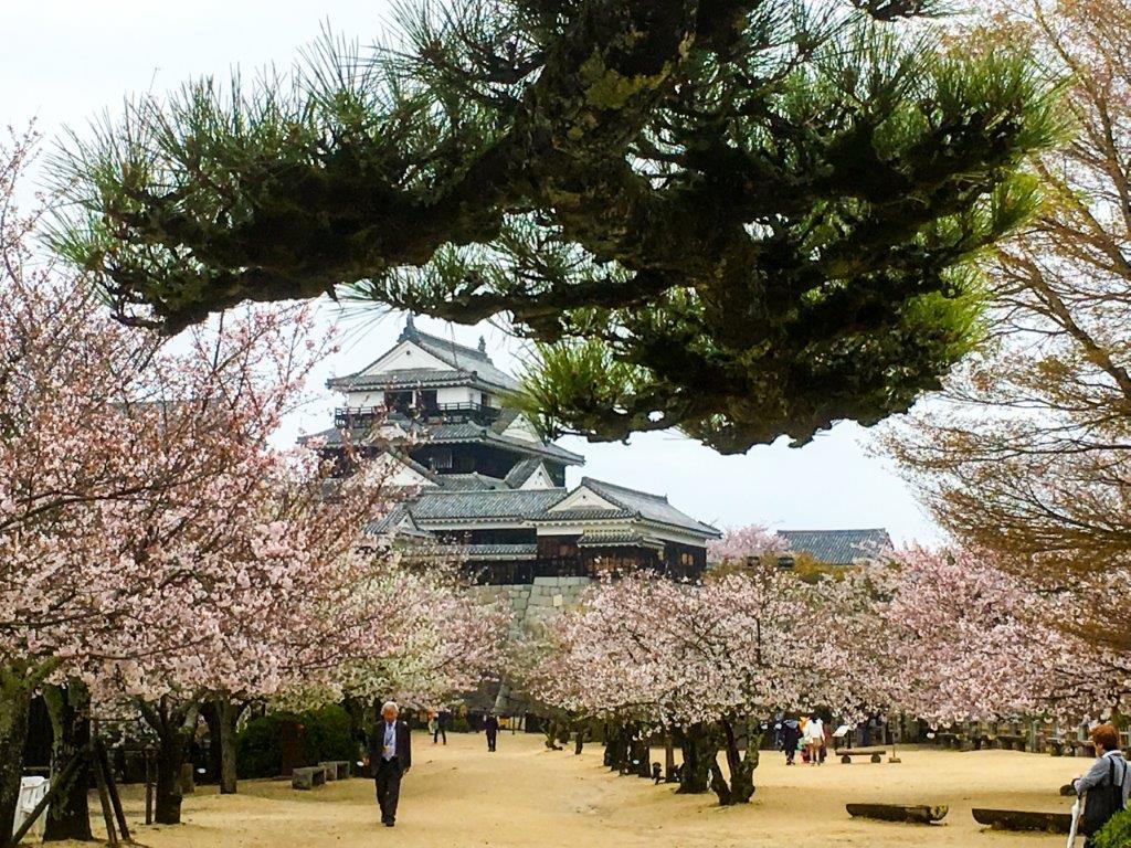 47 松山城公園の桜-5-1