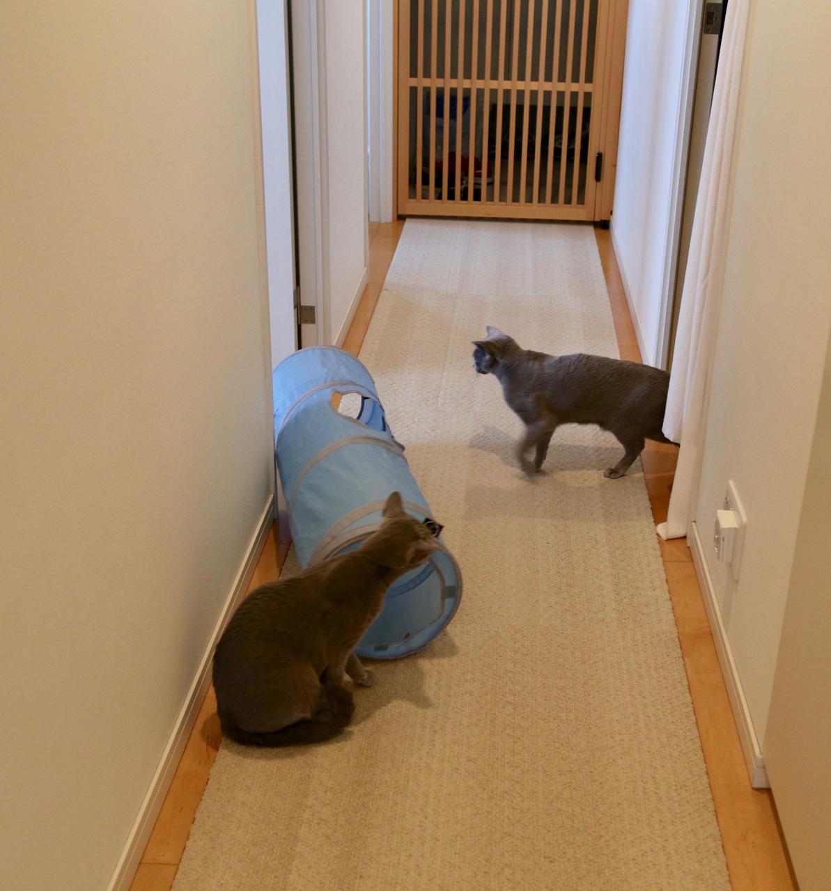 青トンネル