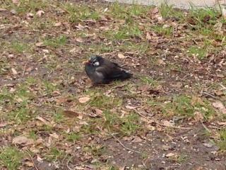 小鳥さんも