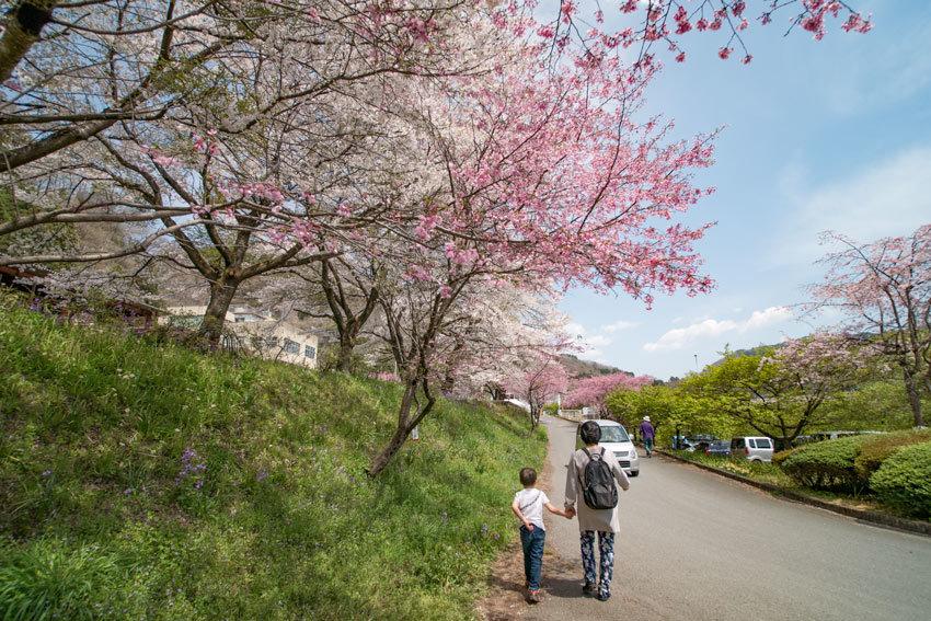 P1080362水沼駅の桜