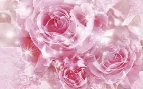Pinkrose.jpg