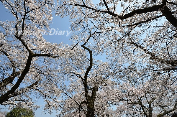 DSC_7951_20170414_3966.jpg