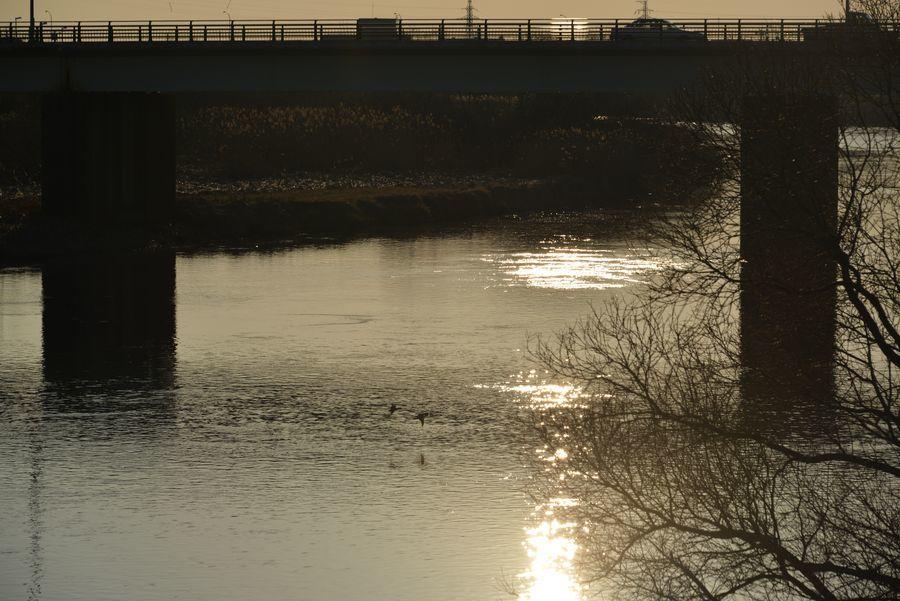 二月最後の日 川辺-1