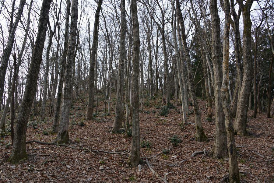 春を待つ 林-1