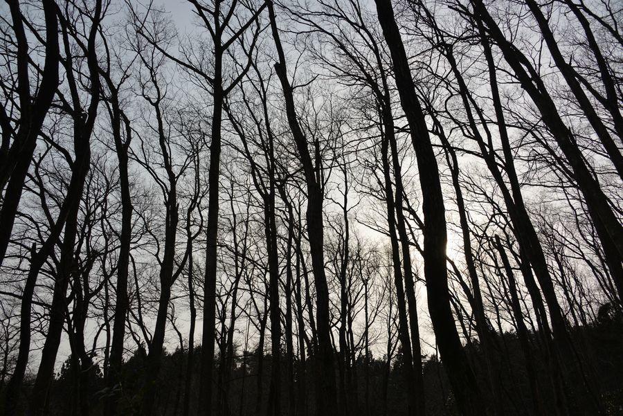 春を待つ 林-4