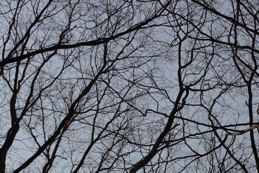 春を待つ 林-5