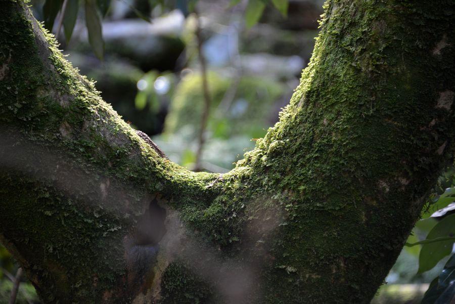 樹の分かれるとき-1